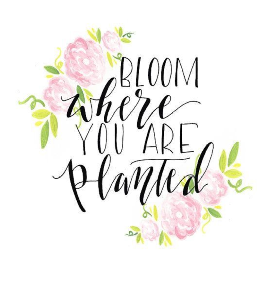 Life Quote Bloom Where You Are Planted Words Of Wisdom Awesome Love Flower Quotes