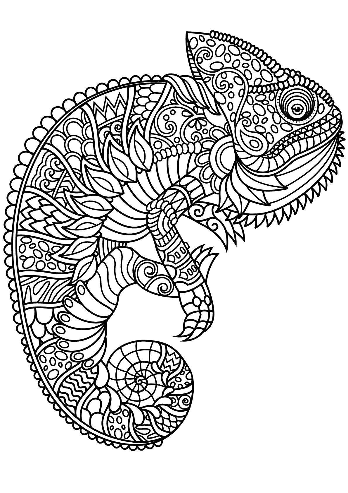 Chameleon, with complex and beautiful patterns, From the