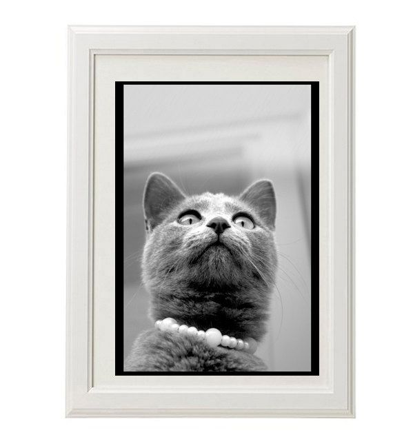 Gray cat print kitty poster art photography black and white photography 8x10