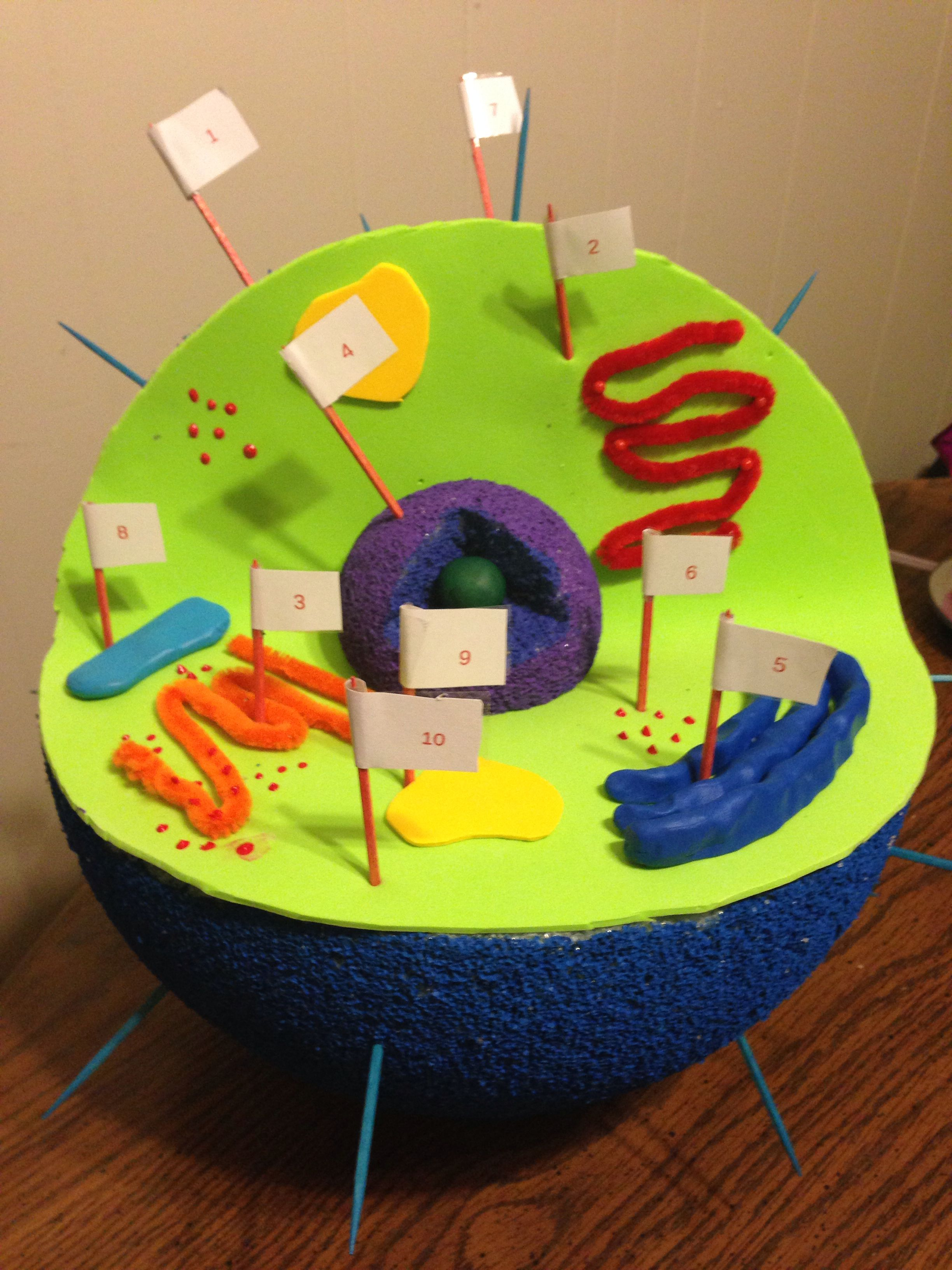 3d cell diagram projects animal cell and plant cell diagram labeled #8