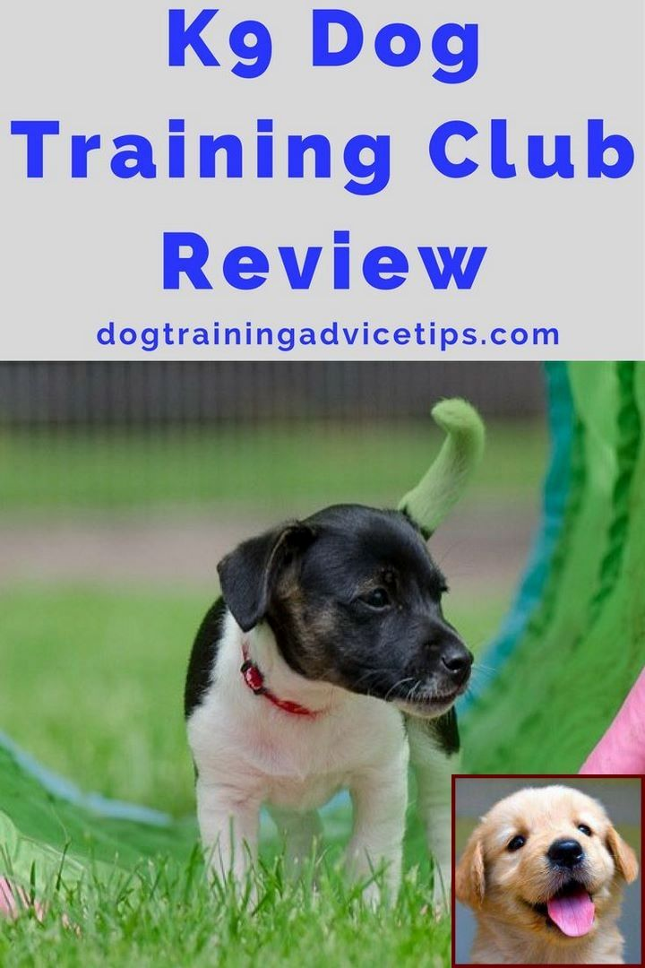 Dog Behavior Nipping And Clicker Training For Dogs Pros And Cons