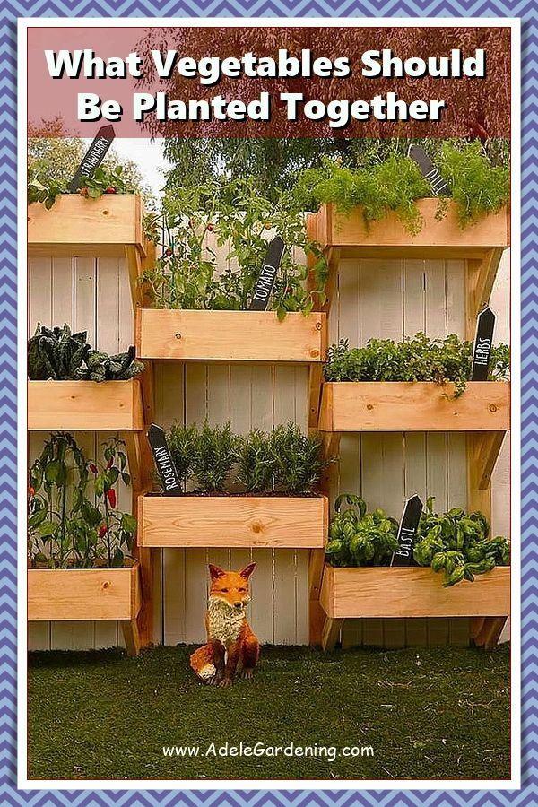 How Long Does It Take To Grow Vegetables From Seed? in ...