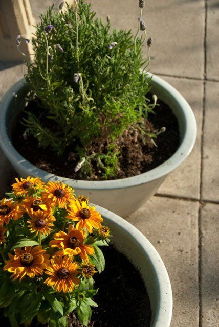 How To Drill Holes In Plant Pots The Diamond Hole Saw Kit Was Not With The
