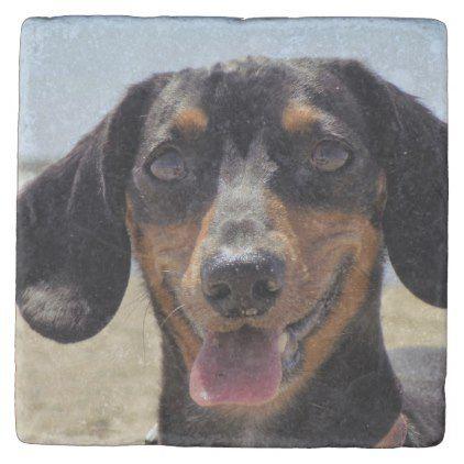 Voyage Stone Coaster Dachshund Puppy Dachshunds Dog Dogs