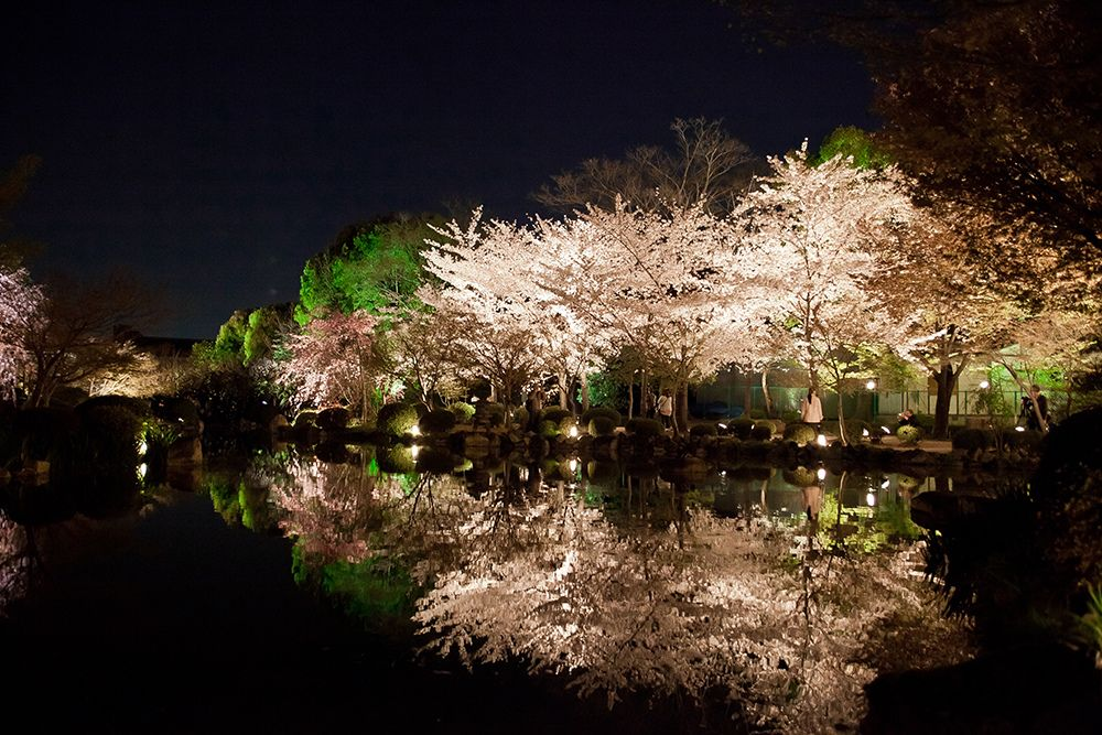 The garden in To-ji Temple of night ,Kyoto : 東寺 京都