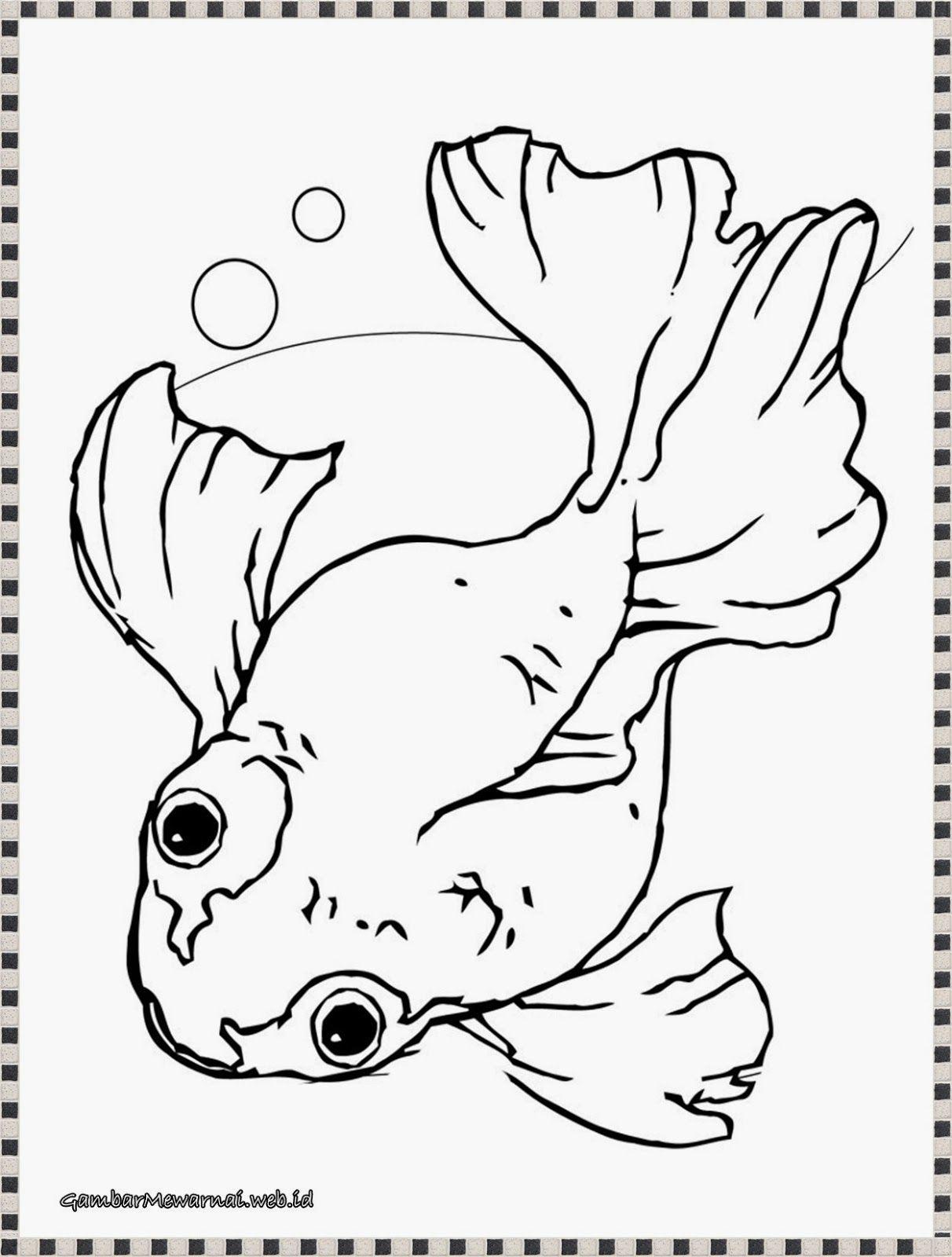 gambar ikan mas koki untuk diwarnai