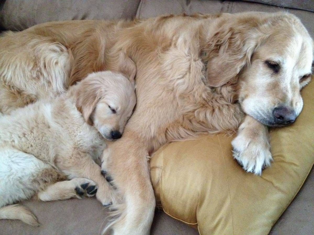 PHOTOS 30 Animal Parents With Their Babies Will Make Your