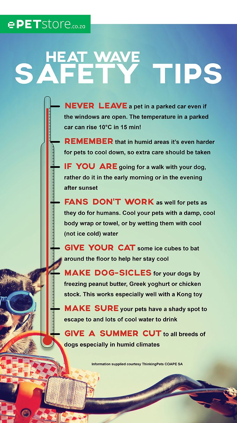 Heat Wave Safety Tips For Dogs And Cats Epetstore South Africa