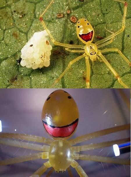Esta araña si que es bien curiosa, ya que en su cuerpo se ve ...