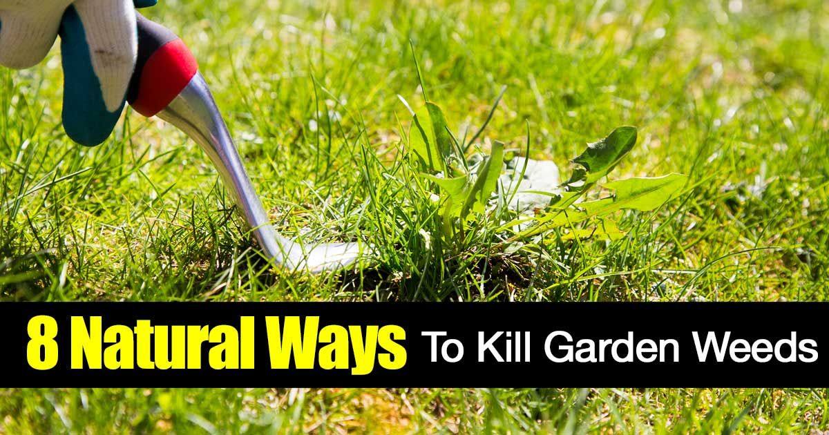 Garden Weeds Who Likes Them? Tired Of Using Chemical Around Plants And  Vegetables? Here