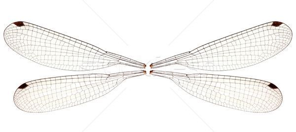 Image Result For Dragonfly Wing Template