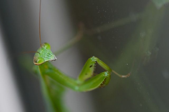 The Praying Mantis Face And Body Language Are Fascinating To Watch Photo By Jeff Gamble Face And Body Body Language Pray