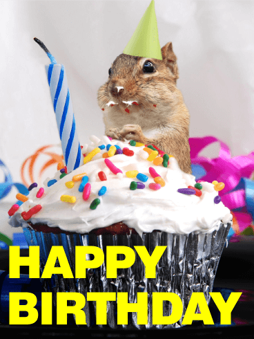 Glutton Squirrel Animal Birthday Card