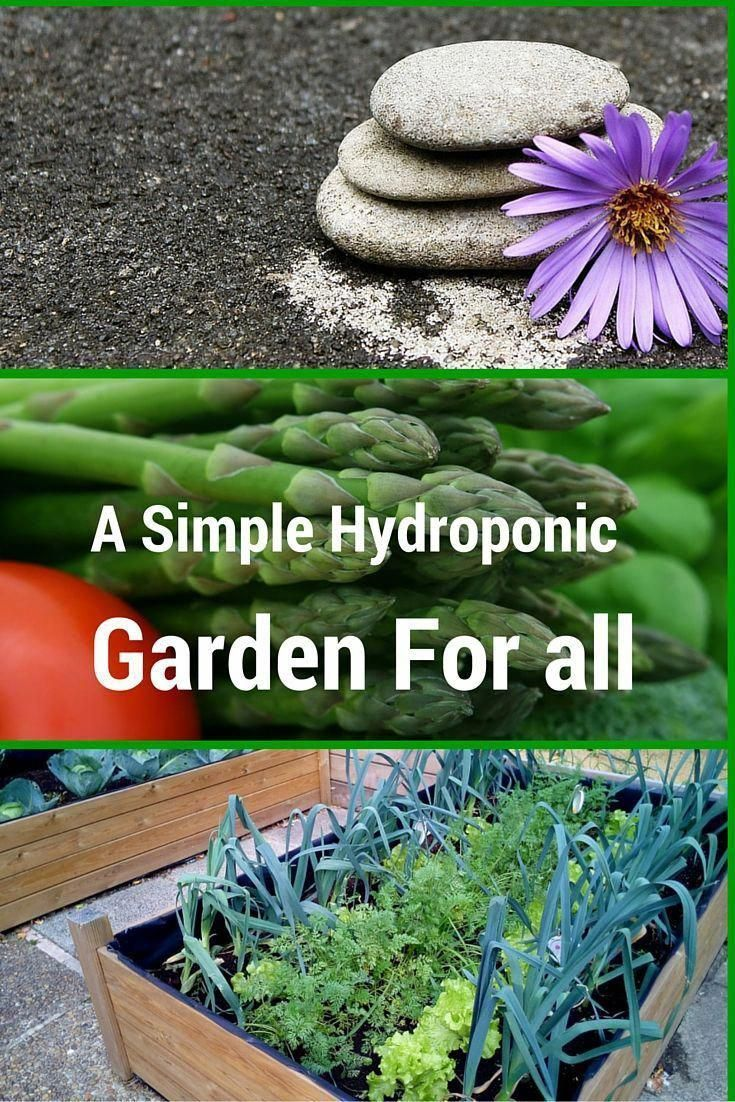 is a simple way to grow plants anywhere indoors or around the house without the troubles of dealing with soil - It's a smart and easy way a simple way to grow plants anywhere indoors or around the house without the troubles of dealing with soil - It's a smart and easy way