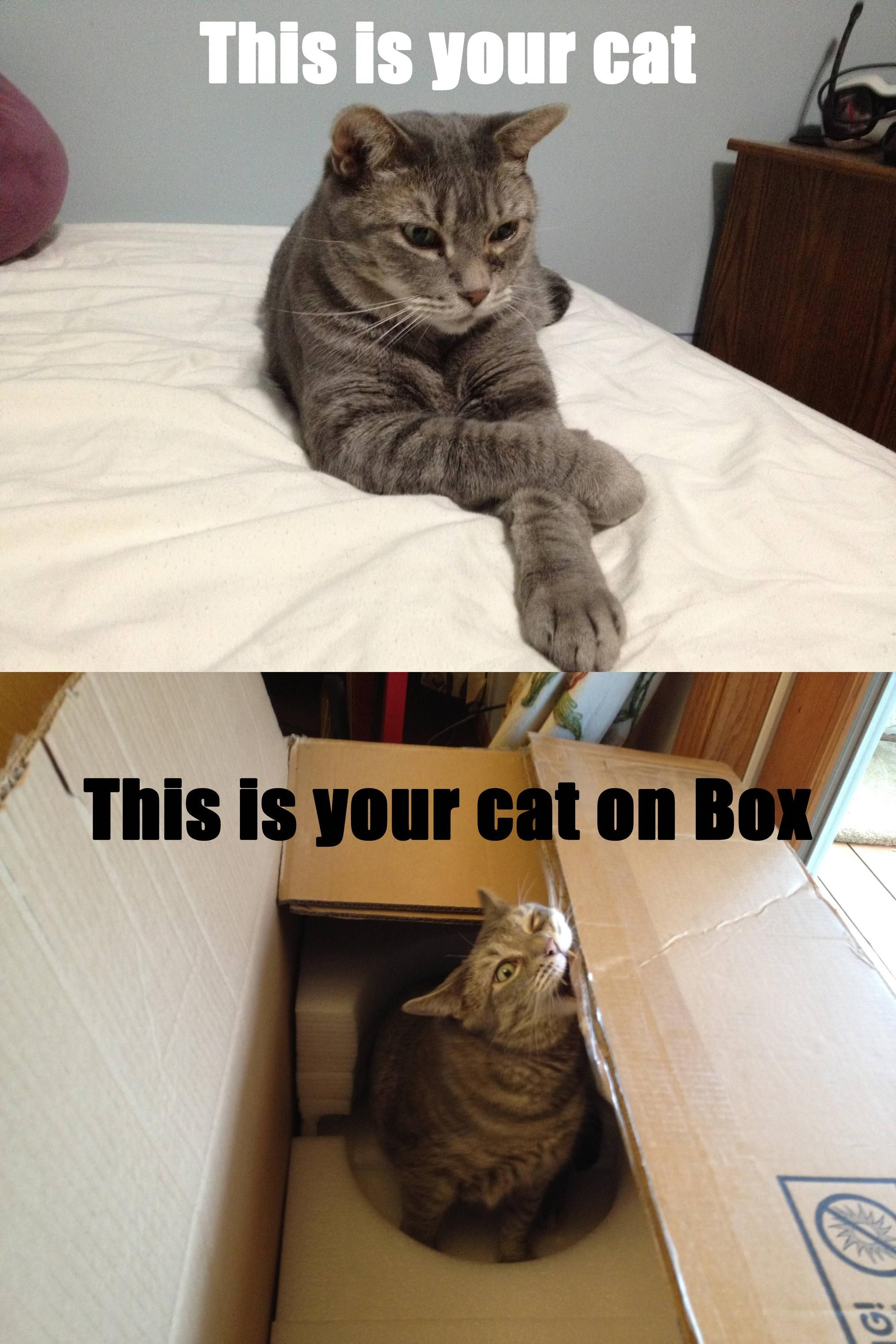 box cat almost the same as catnip Cats, I love cats, Animals