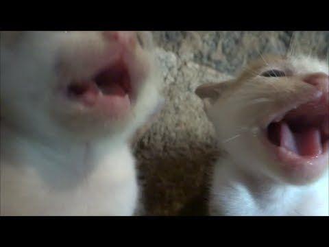 Tough Love Socializing Feral Kittens Part 3 Of 3 Youtube