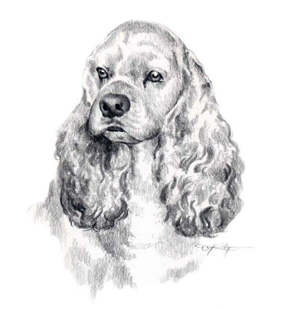 COCKER SPANIEL Dog Art Print Signed by Artist DJ Rogers via Etsy