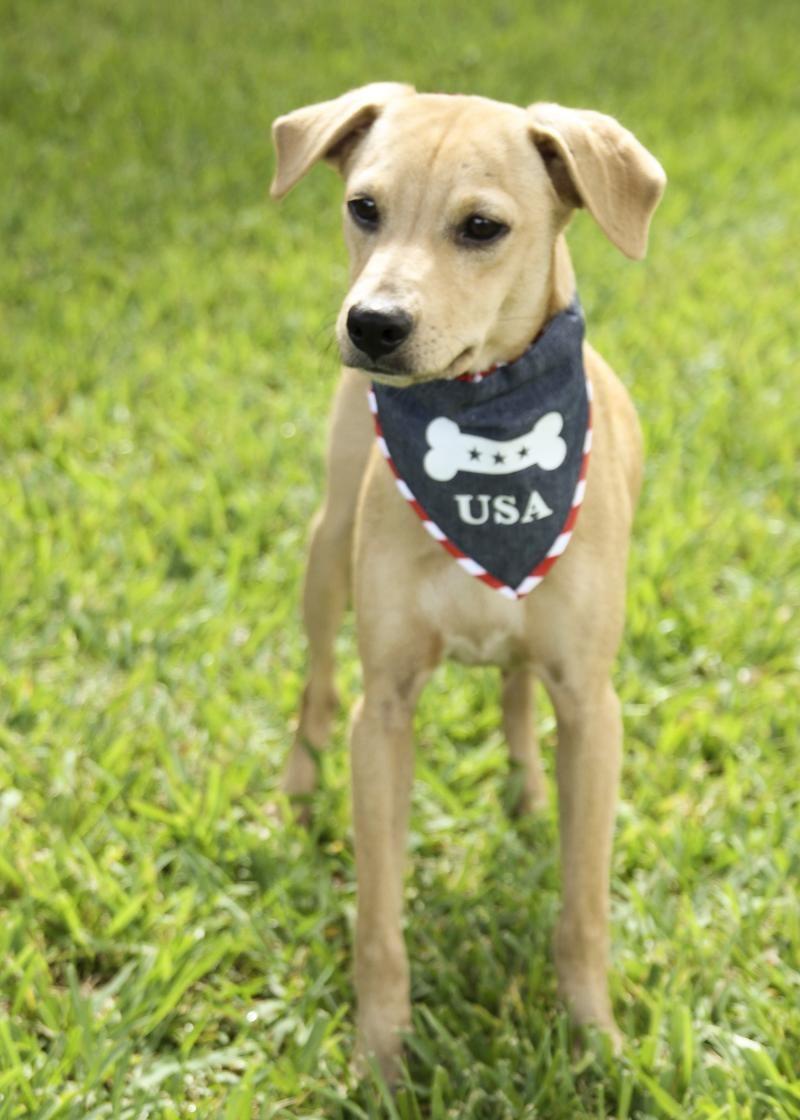 Adopt Cashew On Adoptable Beagle Dog Friends Pet Finder