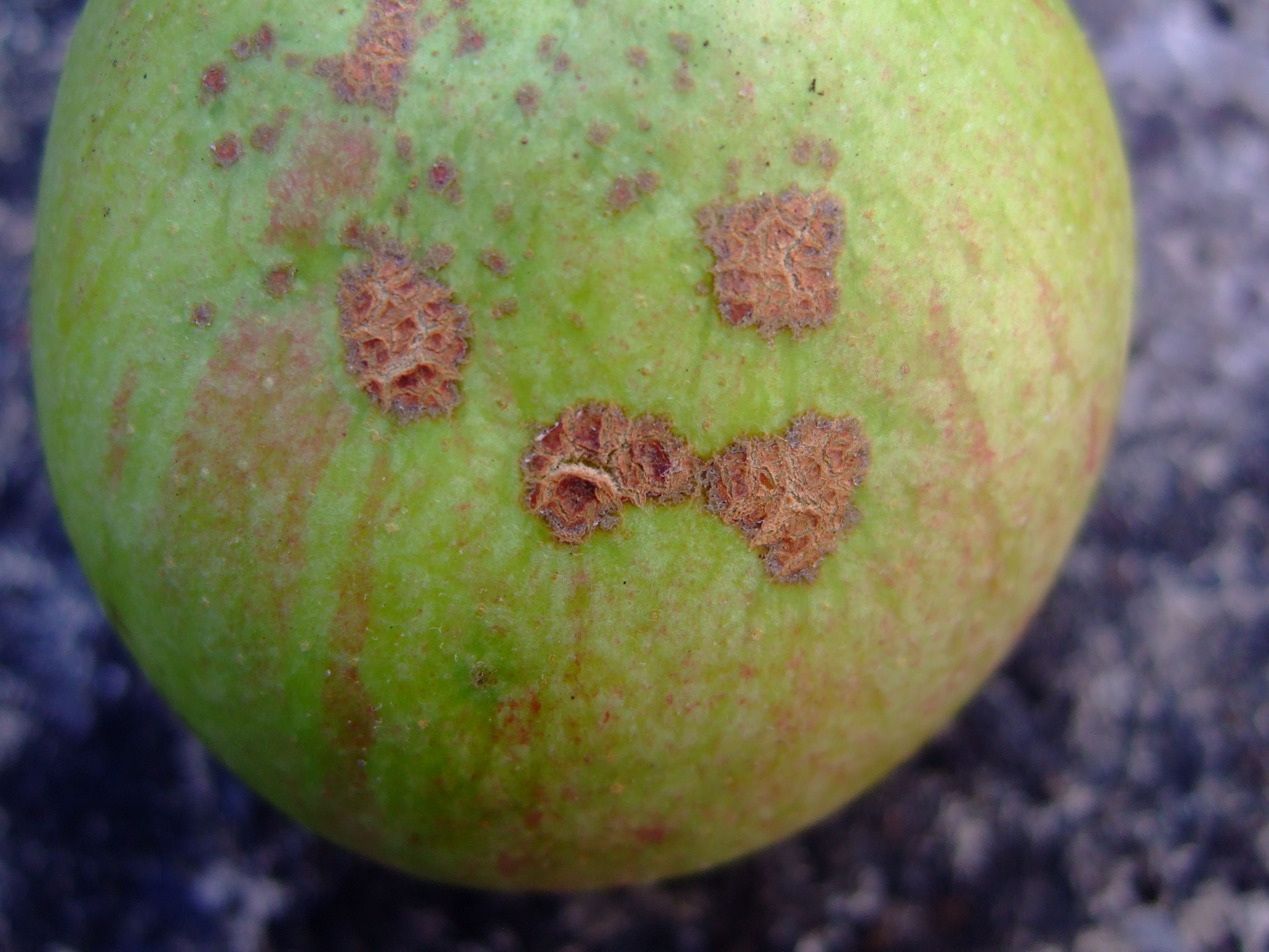 Fruit Diseases In Apple
