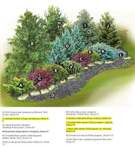 54 Trendy Backyard Privacy Plants Evergreen Shrubs Privacy Landscaping Privacy Landscaping Backyard Backyard Landscaping