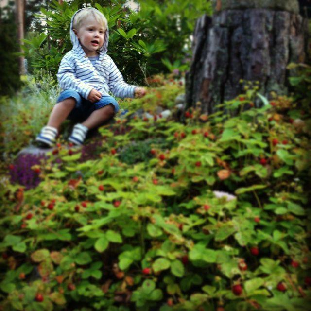 Berryforest