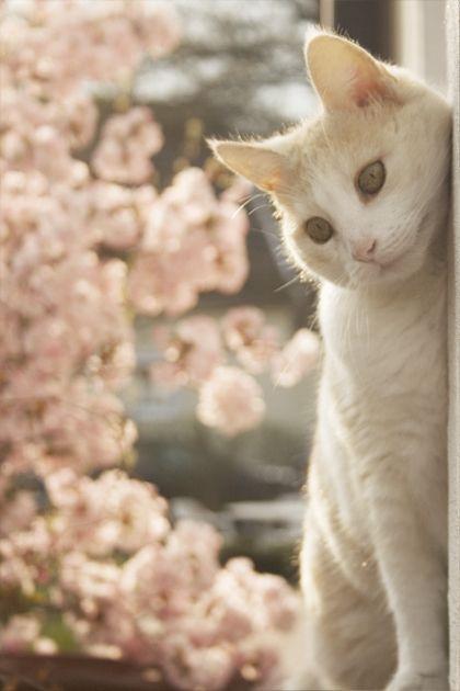 Cat kitten adorable gorgeous love