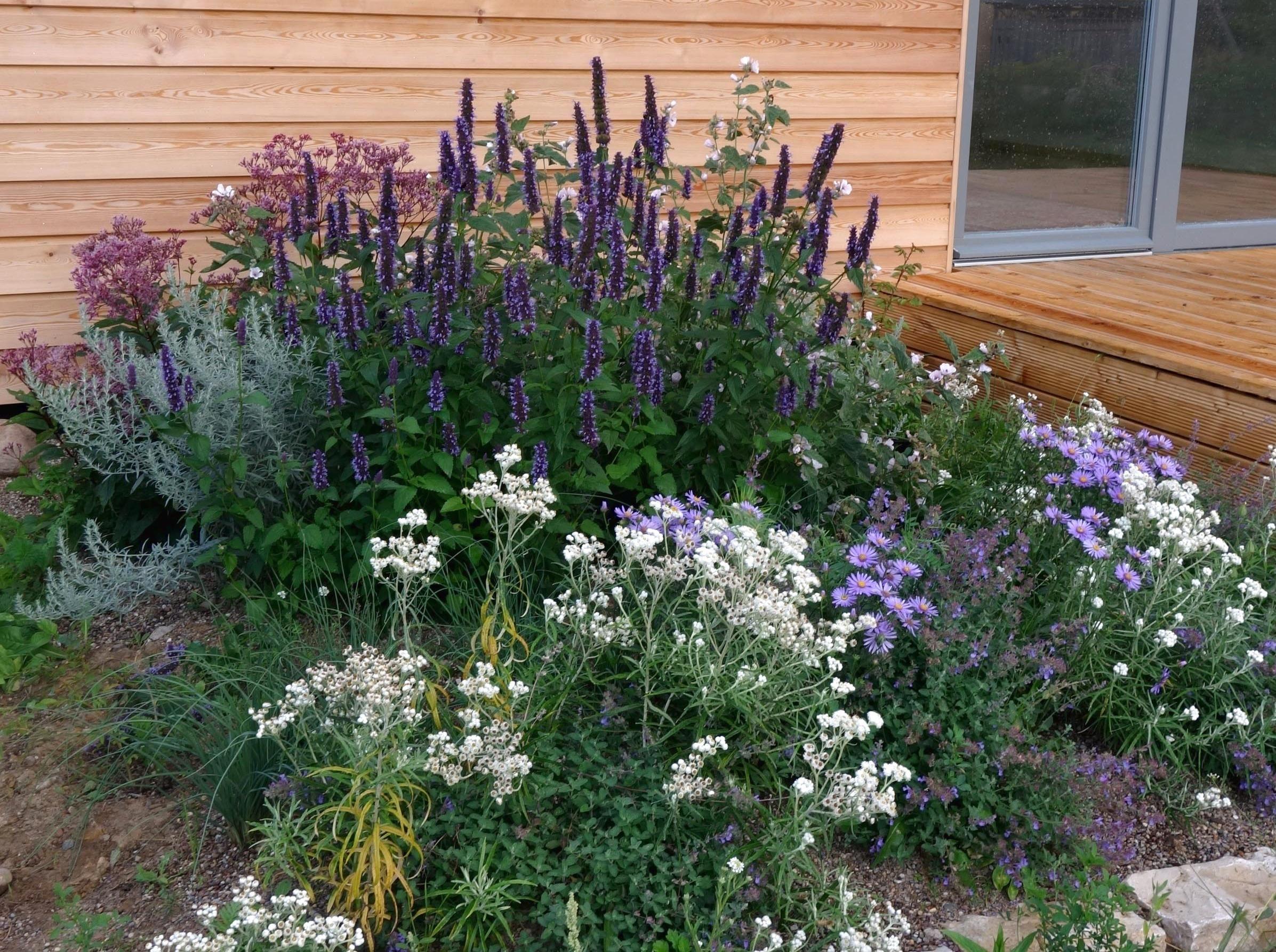Unter Den Klassischen Garten Duftnesseln Ist Mir Die Hybride Black Adder Die Liebste Sie Hat Die Kontraststarksten Bluten Garten Gartenpflanzen Pflanzen