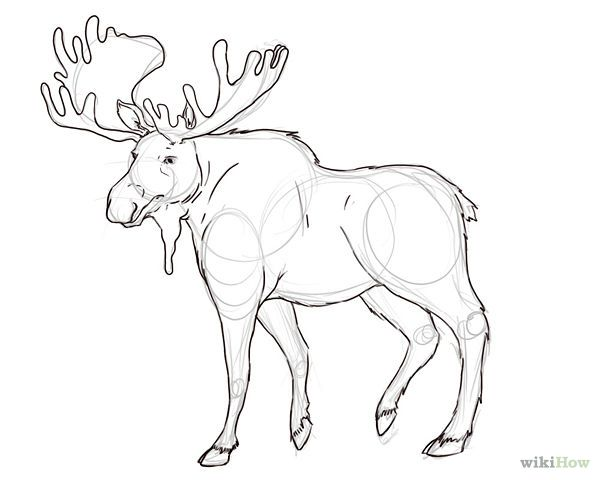 How To Draw A Moose 6 Steps Wikihow Outline Art Animal Drawings Drawings