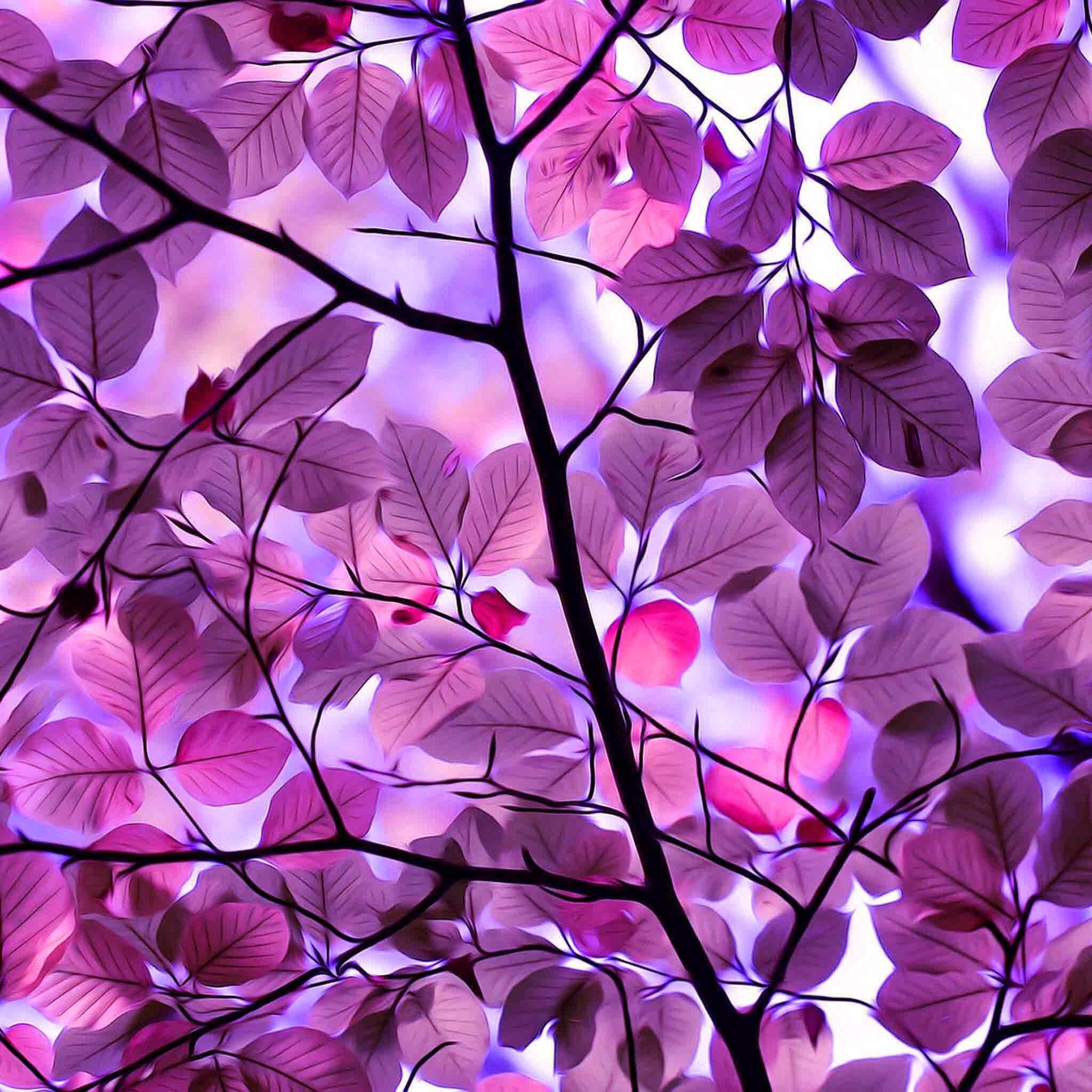 Photo Wallpaper Purple Wallpaper Purple Trees Leaf Background