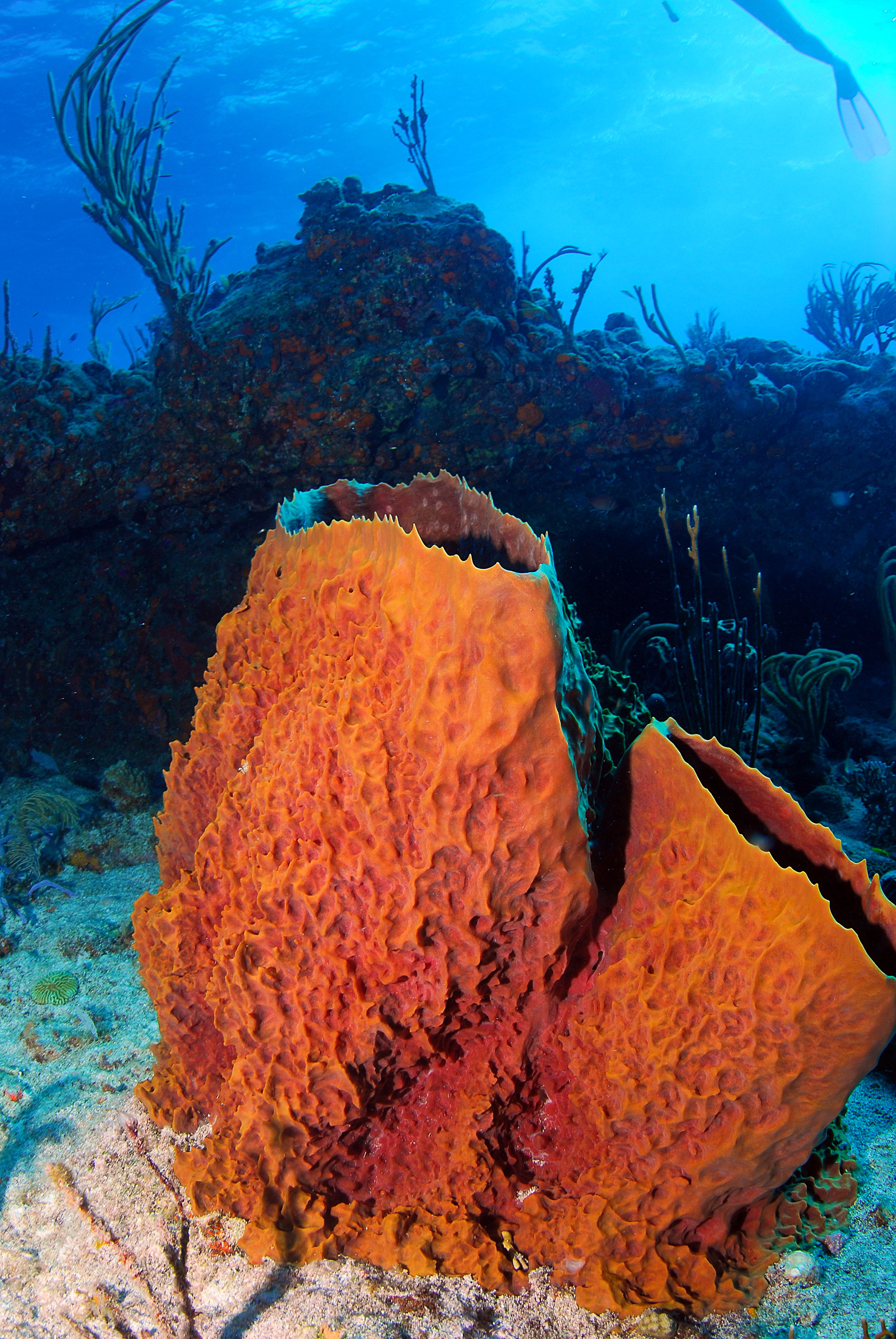 An Incredible Variety Of Marine Life Call The BVI Home