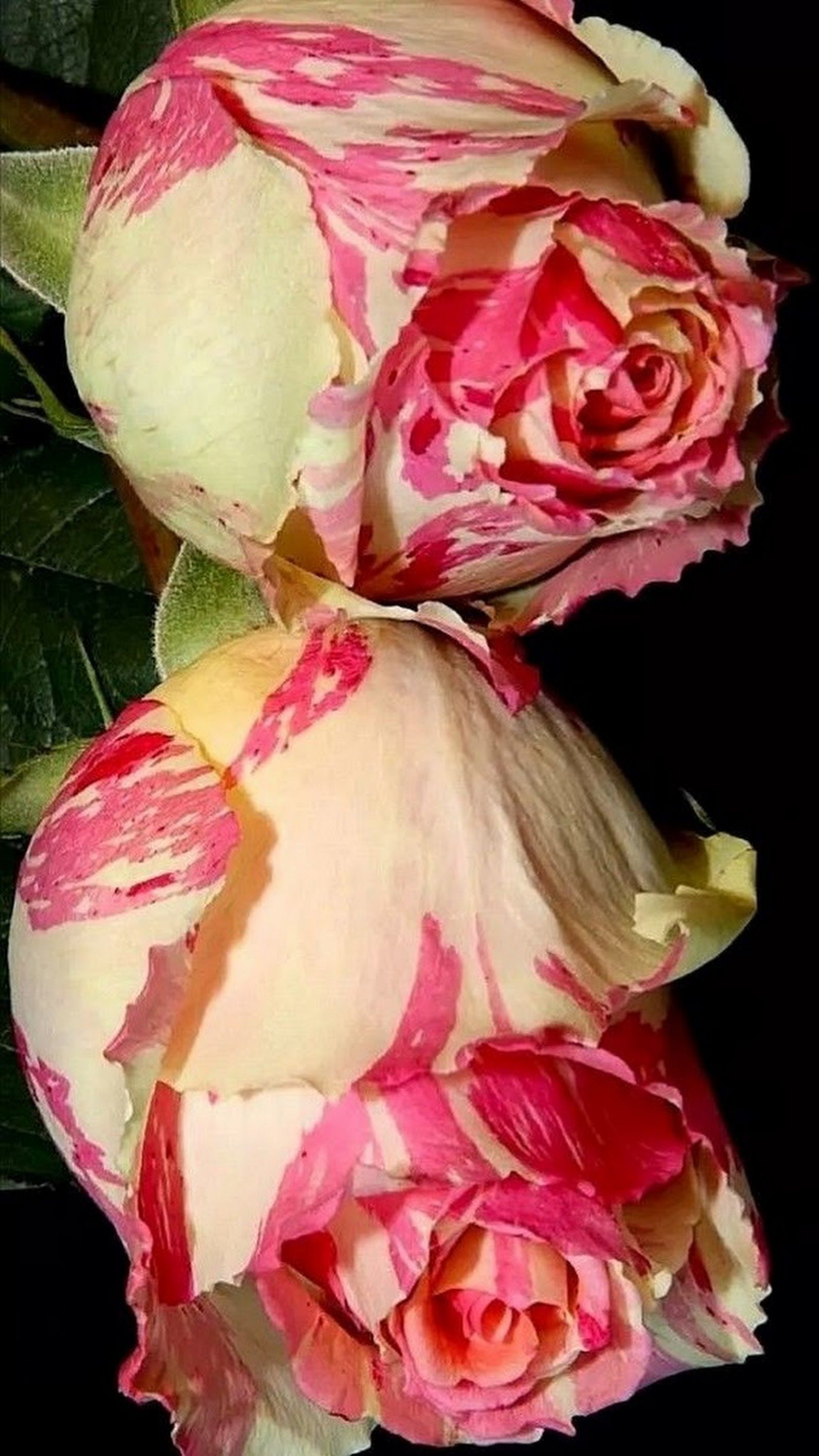Pin by Rajesh Pandey on Hindi quotes Beautiful flowers