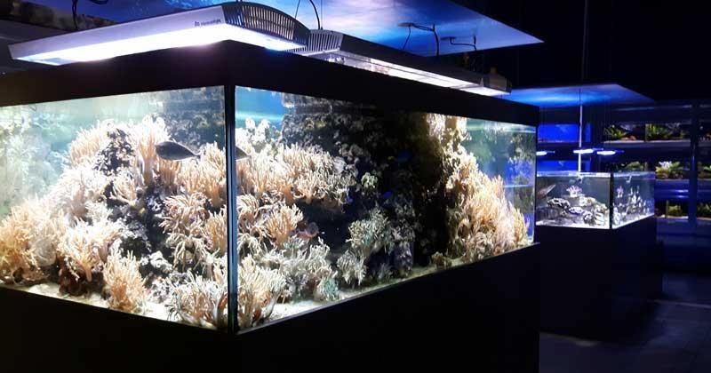 Das Futterhaus Wiesbaden Deutschlands Beste Tiernahrungsabteilung Futterhaus Aquaristik Tiere