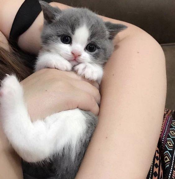 Hi Hooman Am I Pretty Catloverscommunity Catloverscommunity Cats Kittens Cute Baby Cats Baby Cats Cute Cats