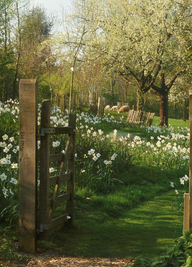 Photo of #Tree meadow #The #Garden #Greve #ineke The tree meadow. Un … Greve, # baumwies …