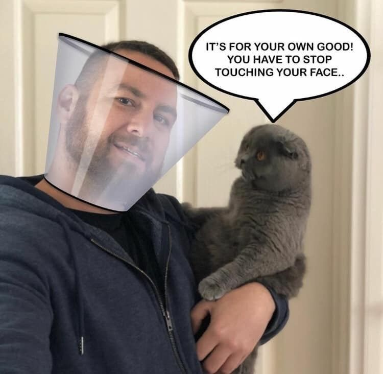 Quarantined Cat Memes For Your Isolated Entertainment In 2020