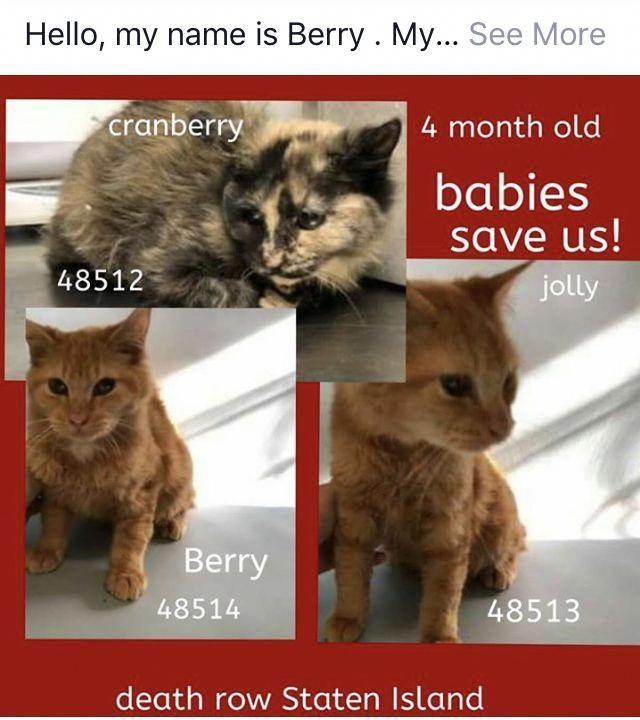Cat In Heat, Benadryl For Cats, Youtube Cats