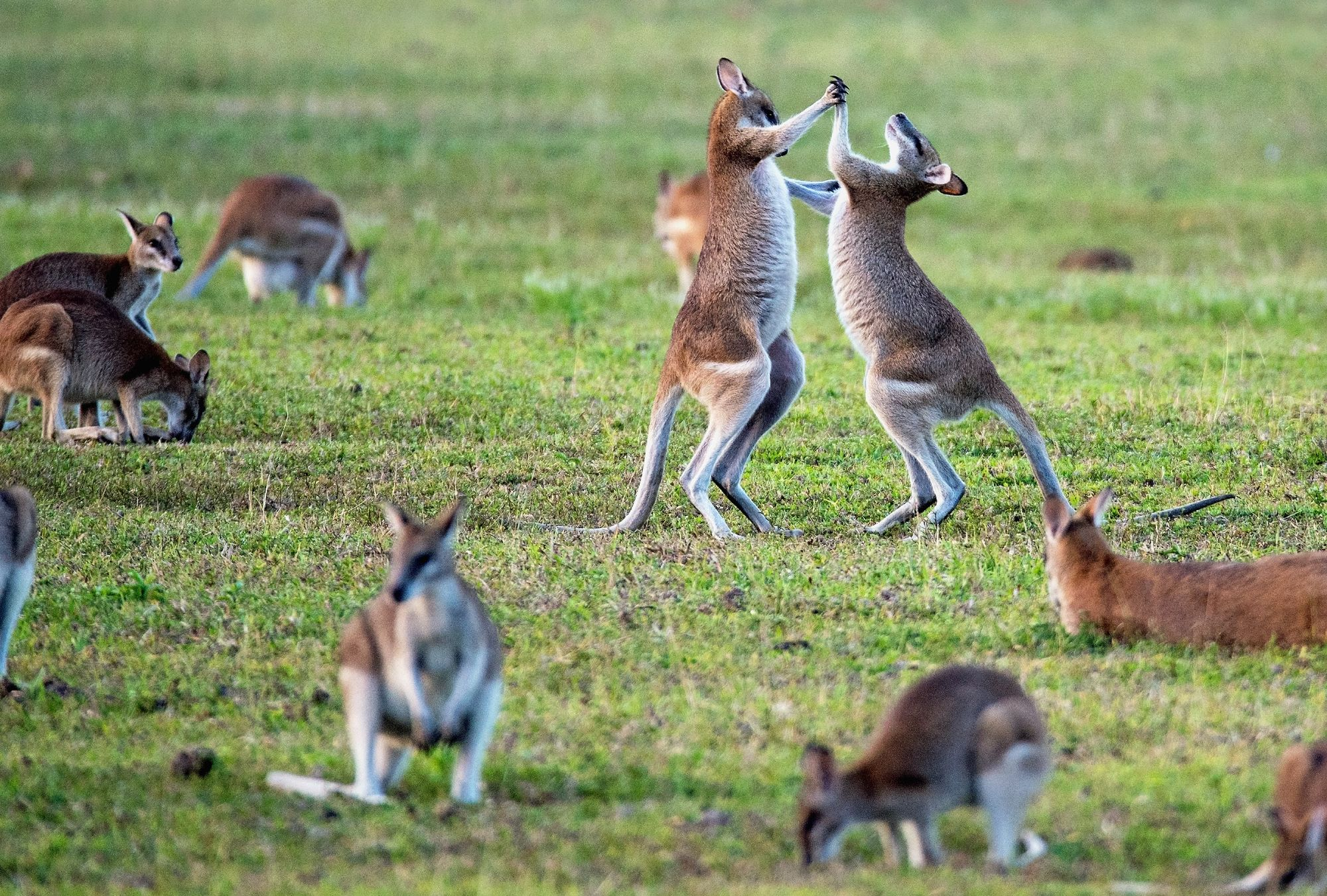 5 Unexpected Things To Do In Australia Pets, Australia