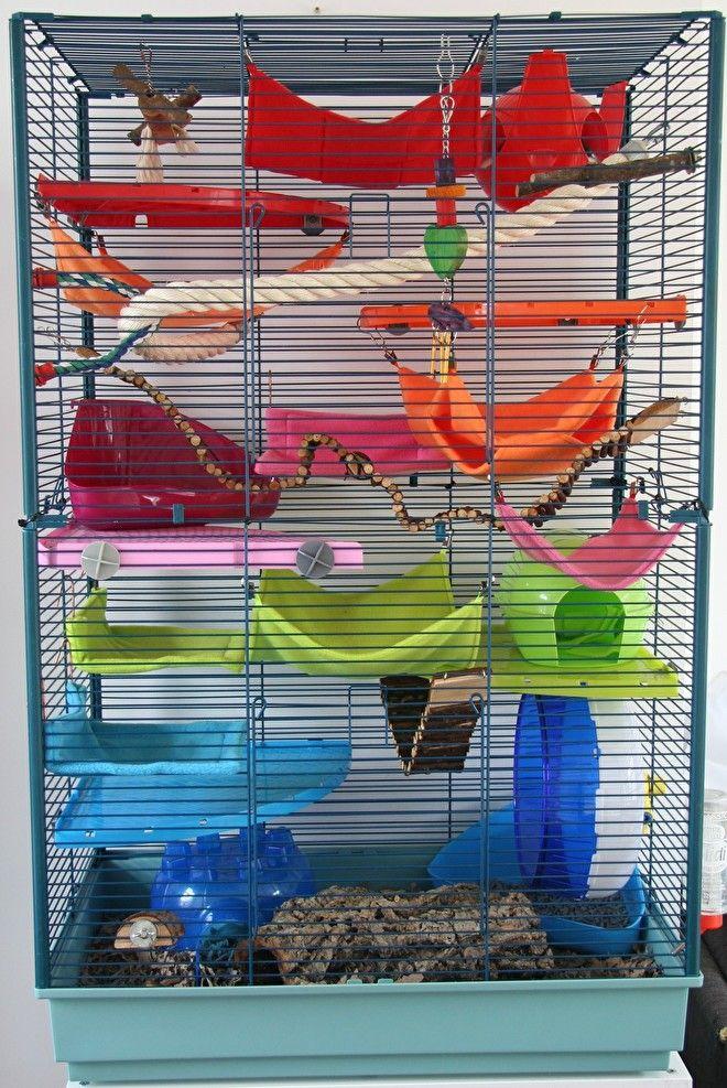 Betere Onze rattenkooi juli 2016 | Hangmatjes Enzo | rat | Pet rats, Pet NG-19