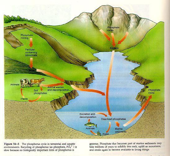 Phosphorus Cycle Time And Life Spiritual Interactions Life And