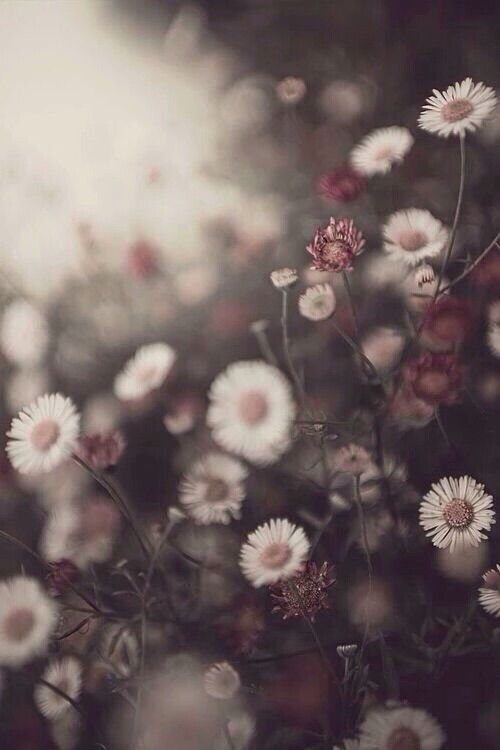 Image Via We Heart It Weheartit Entry 167734253 30569724 Background Black Cool Daisy Flowers Grunge Hipster Wallpaper