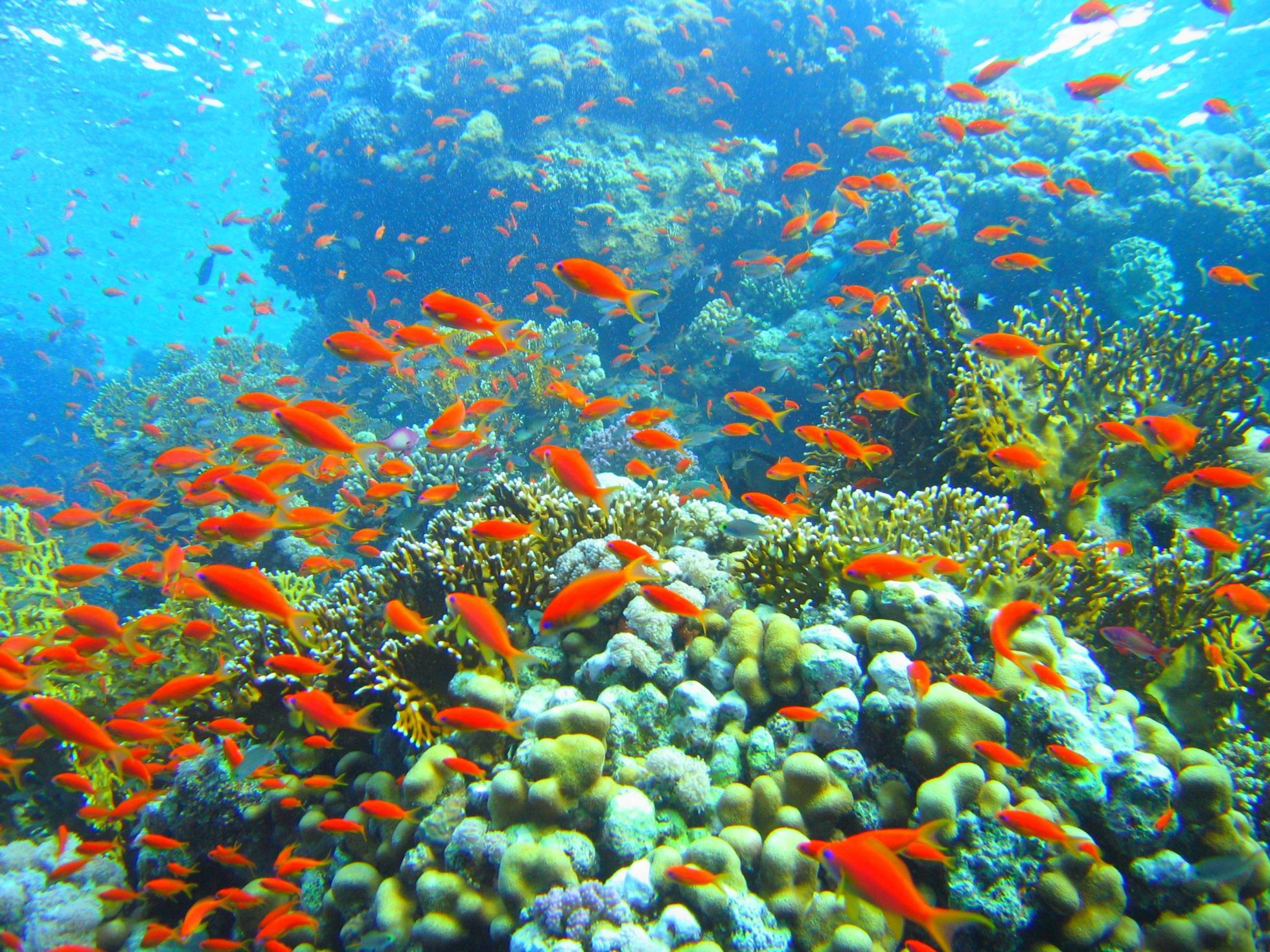 As you snorkel across the Red Sea you will explore the fascinating ...