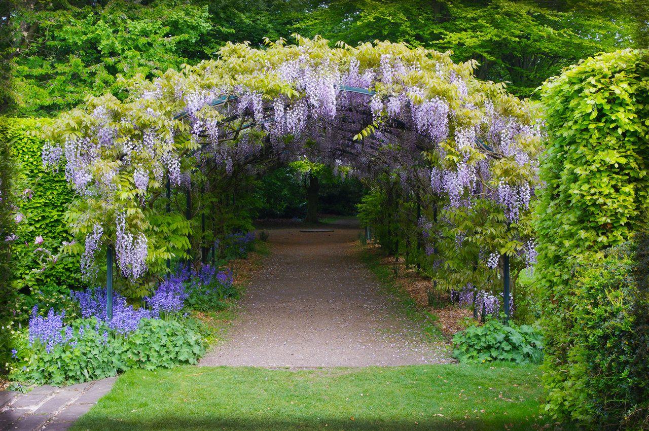 Wisteria Arch By Seanw789 Tuinpad Bloeiende Planten Blauweregen