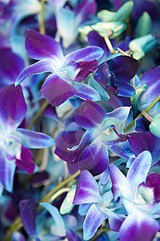 wedding color inspiration, the blue orchid, yes im all about the blue and purple those were my prom colors!!