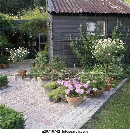 flowering plants in pots paved patio in front of shed in country garden in summer view - Garden Sheds With Patio