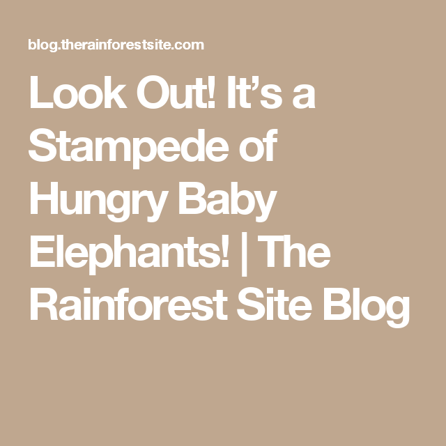 Look Out! It's a Stampede of Hungry Baby Elephants! |  The Rainforest Site Blog