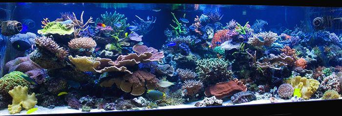 Reefs Magazine - Aesthetics of Aquascaping III. I think ...