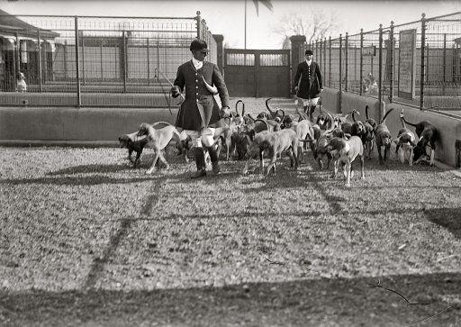 1914 Middleburg Virginia National Beagle Club Of America