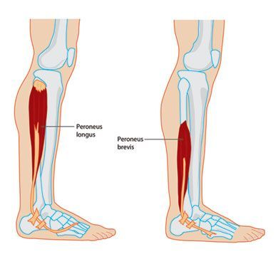 Peroneal Tendinopathy and Tendonitis common soccer injuries, soccer ...