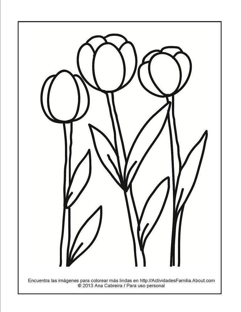 Lindos Dibujos De Flores Para Colorear Rosas Calas Margaritas Tulipanes Girasoles Y Muchas Más Descarga Dibujos De Flores Tulipanes Para Colorear Dibujos