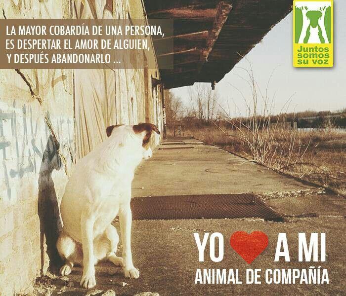 No al maltrato animal
